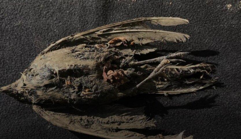 древний жаворонок