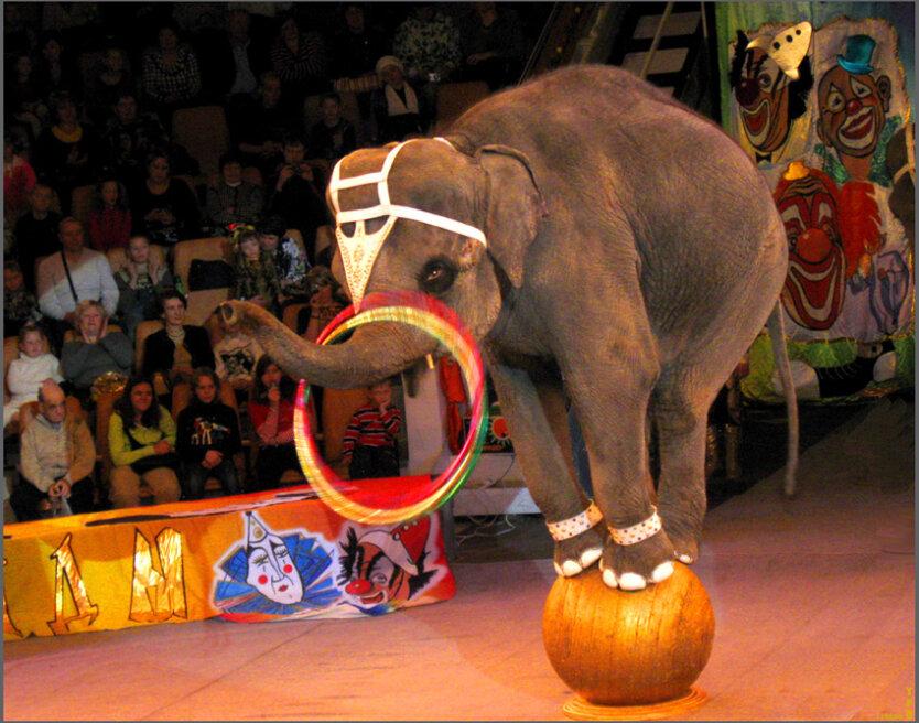 slon-v-tsirke