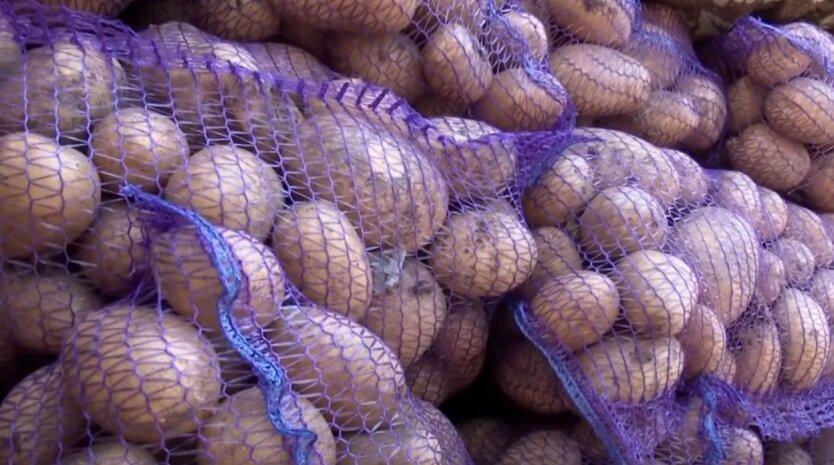 Картофель, цены, Украина
