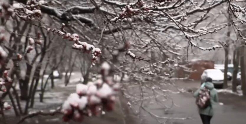 Заморозки, Украина, синоптики
