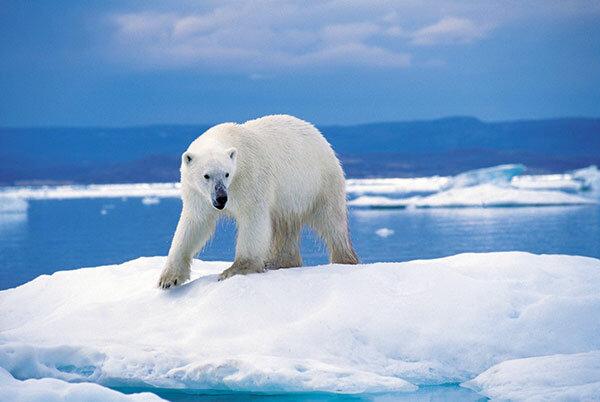 ледник1