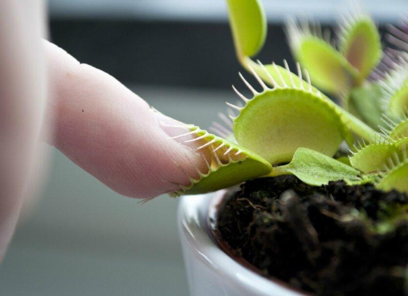 плотоядные-растения