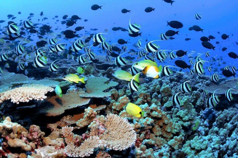 коралы рифы