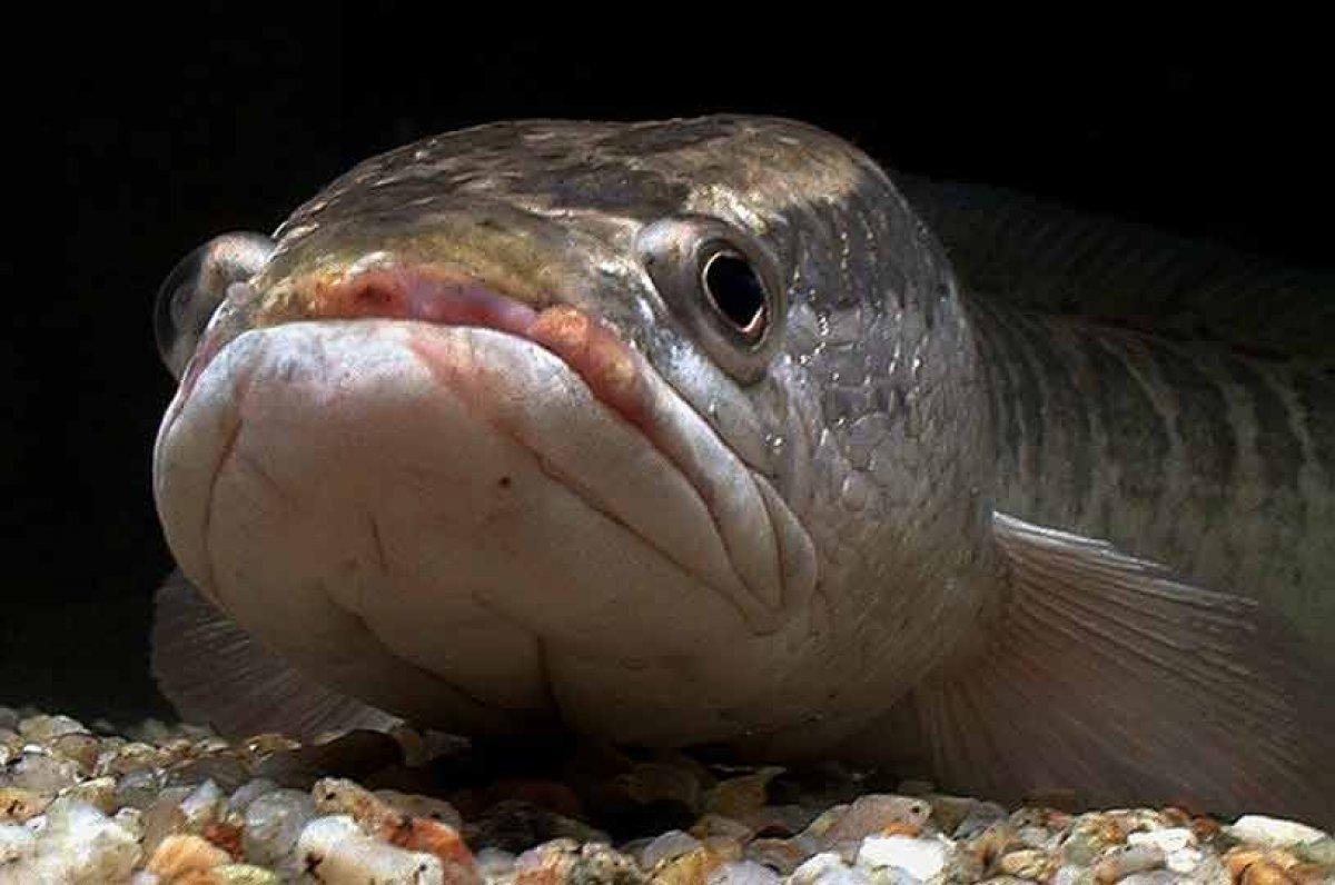 Картинки змей головы рыбы