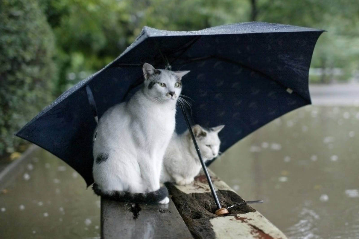 Веселые картинки про погоду летом